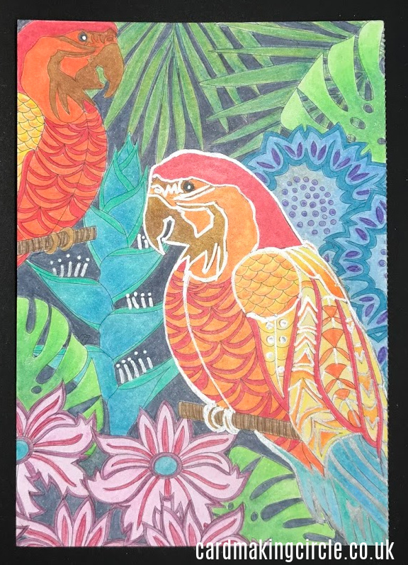 Parrot postcard from Clarity Stamps coloured with Polychromos coloured pencils.